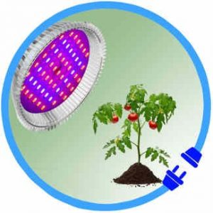 LED Grow Lights and Hydroponic Equipment